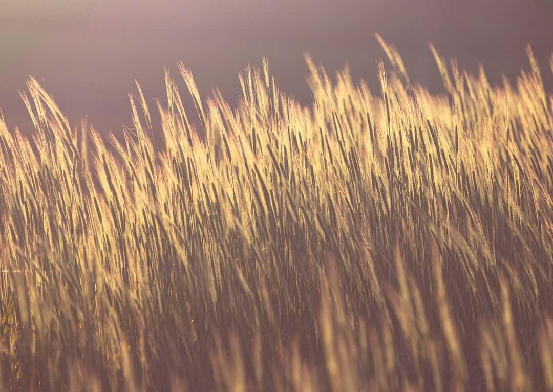 A close up of some grass